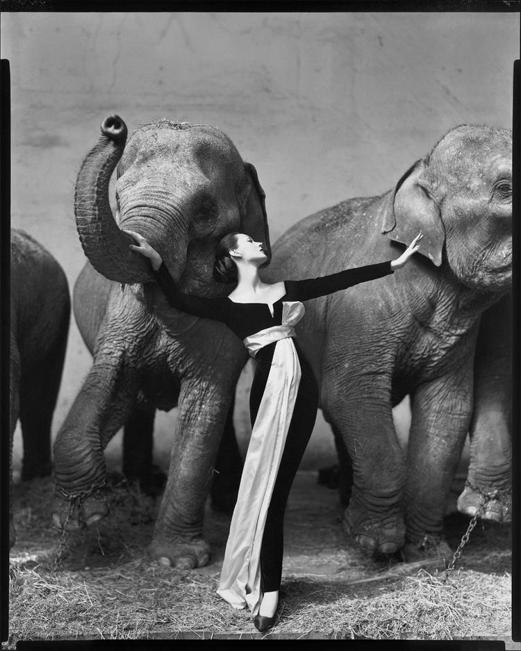 fotografia-de-moda-avedon-dovima-con-elefantes-