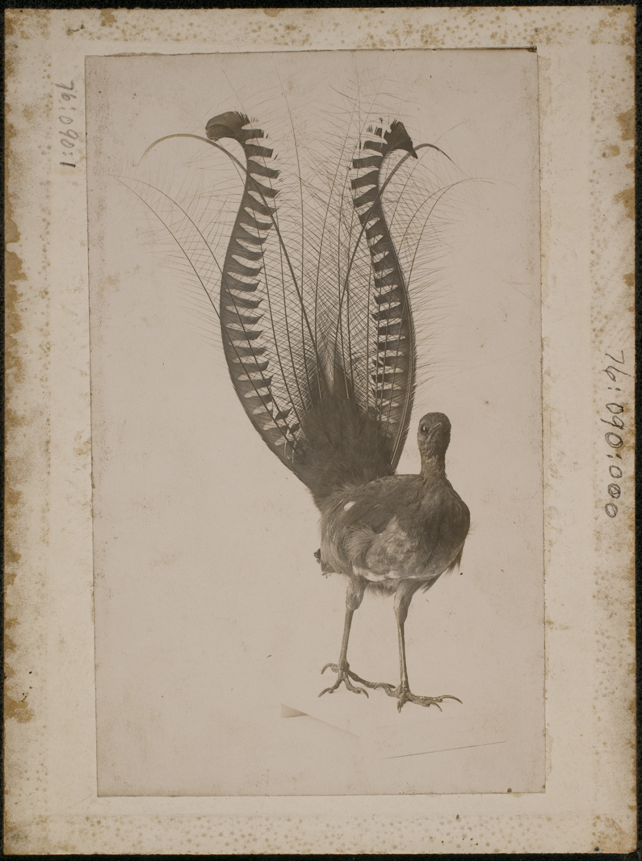 Luis Soler Pujol 1910, Fotografía de Eastman Museum