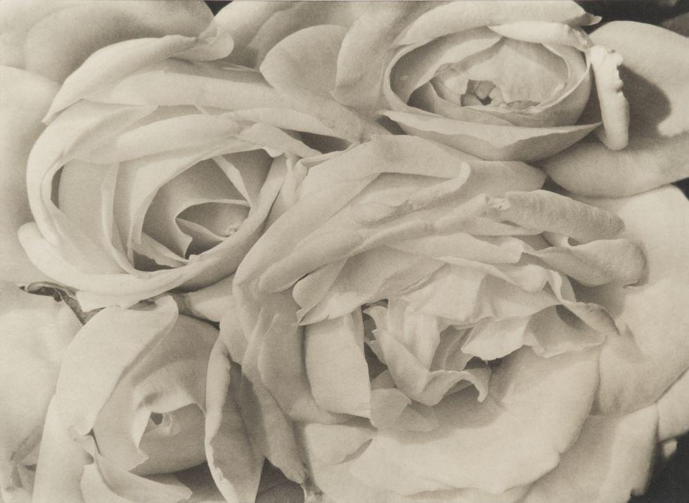 tina modotti rosas